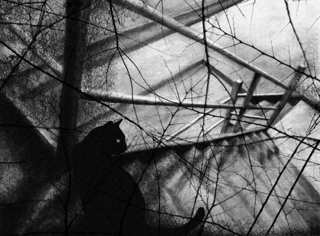 ChatNoir (Gato Negro)_Delphine Labedan